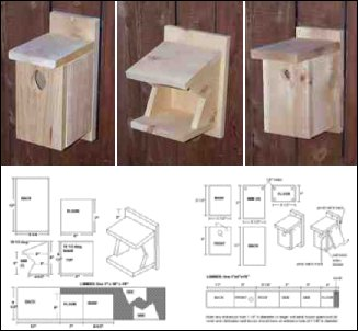 bird house plans by species